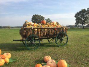 Herbstimpressionen aus Brandenburg