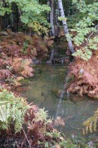 Wild Gardens Acadia